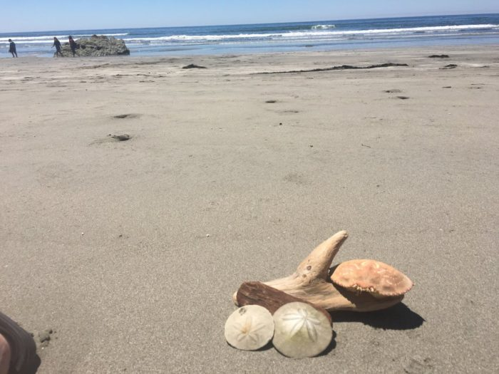 Driftwood Structures And Seashells You Ll Definitely Come Across Plenty Of Beautiful Sand Dollars They Are Tered All Over Crescent Beach