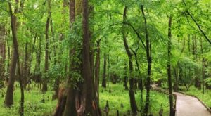 The Ancient Forest In South Carolina That's Right Out Of A Storybook