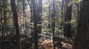 This Hike Takes You To A Place Indiana's First Residents Left Behind