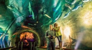 This Jaw-Dropping Museum Lets You Walk Through All The World's Habitats Under One Roof