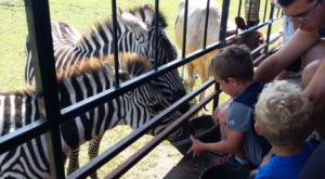 There's A Wildlife Park In Indiana That's Perfect For A Family Day Trip