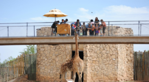 You Can Feed Giraffes At This One Unique Zoo In Texas