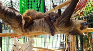 There's A Sloth Farm In Oregon And You're Going To Love It