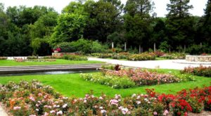 There's A Beautiful Rose Garden Hiding In Milwaukee And It's So Worth A Visit
