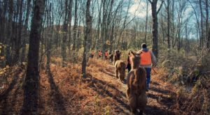 Go Llama Hiking Through The Forest On This Unforgettable Connecticut Adventure