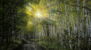 The Ancient Forest In Colorado That's Right Out Of A Storybook