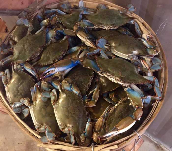 Richard 39 s fish and crabs has some of the best seafood in for Maryland state fish