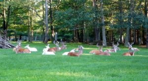 There's A Deer Farm Near Pittsburgh And You're Going To Love It