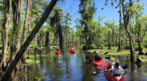 9 Incredibly Fun Swamp Tours Around New Orleans To Take This Year