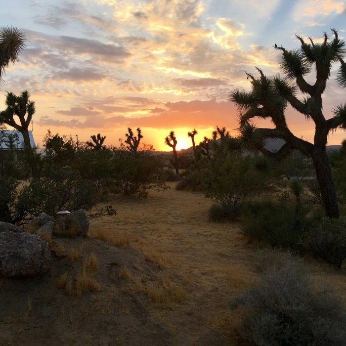 Joshua Tree Retreat Center Is An Oasis In The Southern