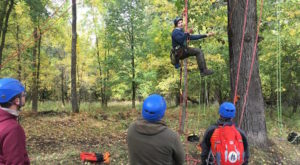 Embrace Your Inner Child With A Trip To This Oregon Tree Climbing School