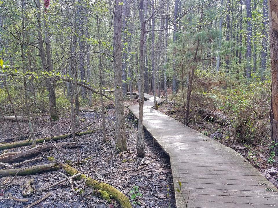 Hughlett Point Natural Area Has The Best Boardwalk Hike In