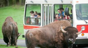 Most People Don't Know This Washington Zoo And Adventure Park Even Exists