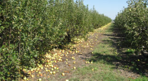 You'll Have Loads Of Fun At These 10 Pick-Your-Own Fruit Farms In Texas
