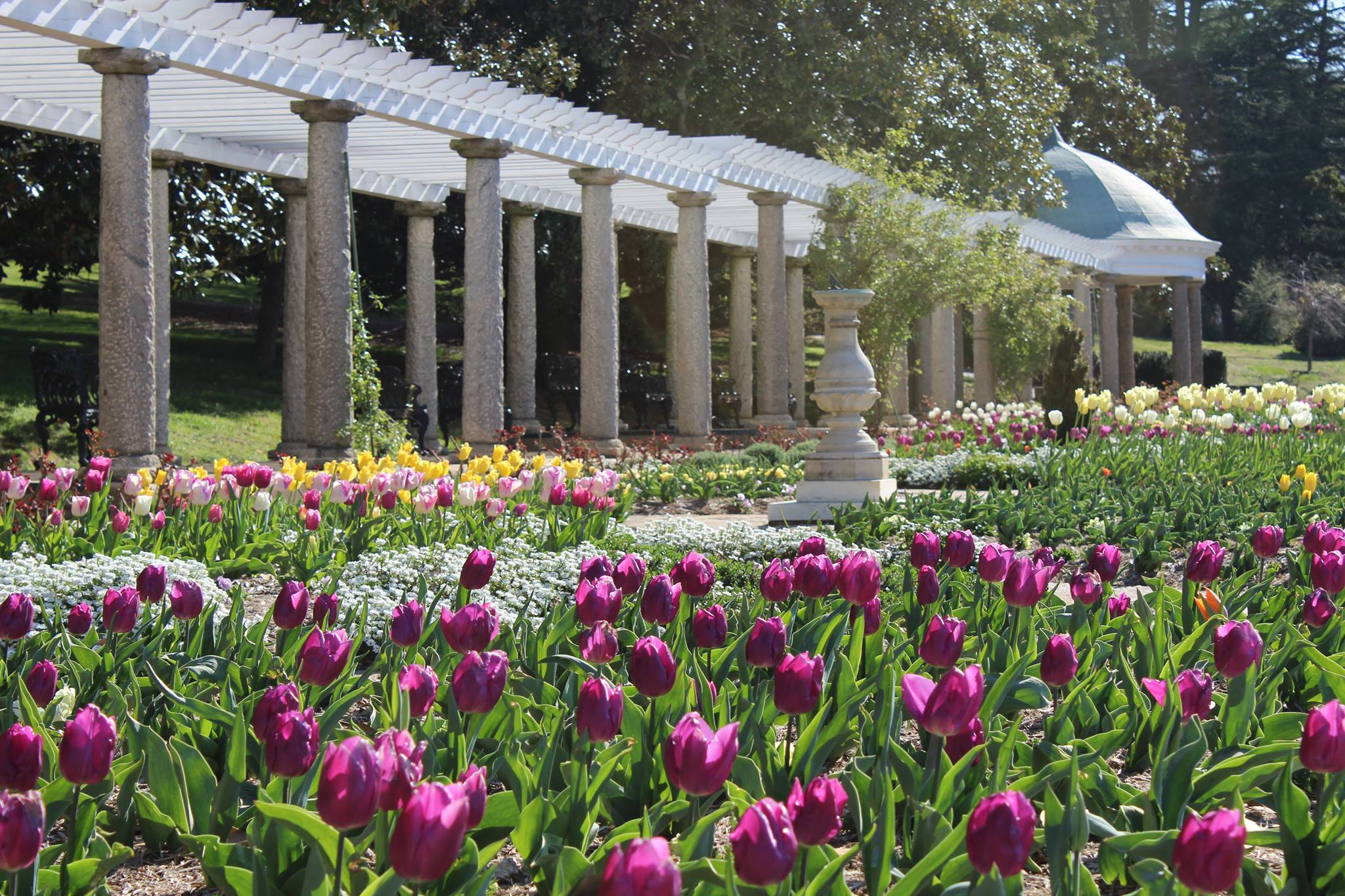 The italian garden at maymont has the biggest tulip field in virginia for Tulip garden in texas