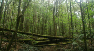The Ancient Forest In Hawaii That's Right Out Of A Storybook