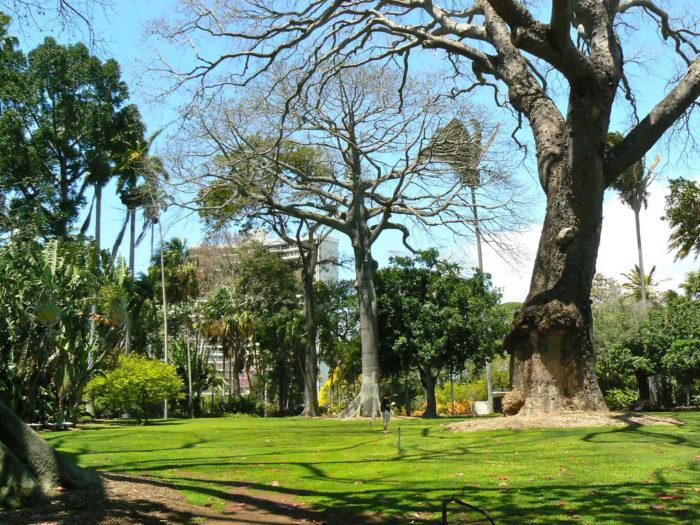 Hawaii 39 s foster botanical garden is like a fairytale come to life for Foster botanical garden honolulu
