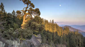 The One Incredible Trail That Spans The Entire State of Oregon