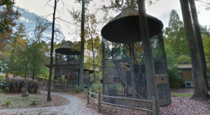 The Little Known Lemur Park In North Carolina Everyone In Your Family Will Love