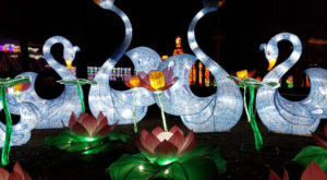This Magical Summer Lights Festival In South Carolina Will Enchant You In The Best Way Possible