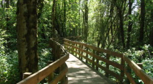 This Enchanting Oregon Boardwalk Hike Will Leave You Completely Charmed