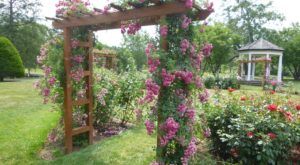 There's A Beautiful Rose Garden Hiding In Pennsylvania And It's So Worth A Visit
