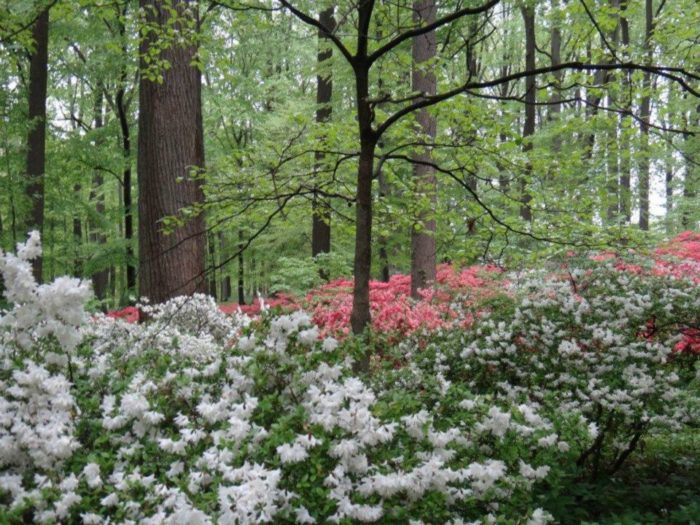 Secret Garden: Winterthur's Sundial Garden Is The Most Enchanting Secret