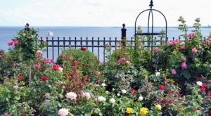 There's A Beautiful Rose Garden Hiding In Minnesota And It's So Worth A Visit