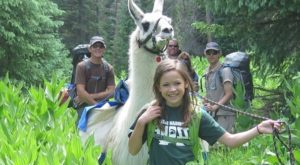 You Can Have Lunch With Llamas At This Unique Colorado Destination