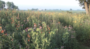 This Breathtaking Field Of Wildflowers In Ohio Looks Like Something From A Dream