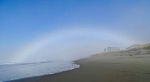 The Amazing Sand Dollar Beach Every Washingtonian Will Want To Visit
