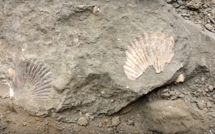 Take A Trip To Beverly Beach In Oregon To Discover Ancient