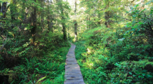 This Beautiful Boardwalk Trail In Washington Is The Most Unique Hike Around