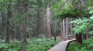 This Beautiful Boardwalk Trail In Montana Is The Most Unique Hike Around
