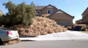 Tumbleweeds Are Taking Over This California Town And It's Worse Than You'd Think