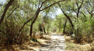 There's A Wilderness Garden Park In Southern California That Is A Dream To Explore
