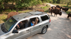 There's A Wildlife Park In Nebraska That's Perfect For A Family Day Trip