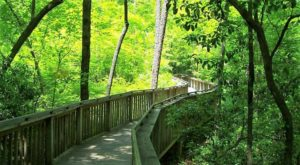 This Beautiful Boardwalk Trail In Alabama Is The Most Unique Hike Around