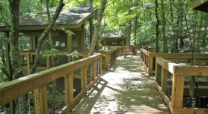 Hike This Treetop Nature Trail In Alabama For An Unforgettable Outdoor Adventure