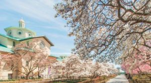 7 Places To See Gorgeous Cherry Blossoms Around The U.S. This Spring Besides D.C.
