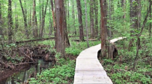 This Beautiful Boardwalk Trail In Maryland Is The Most Unique Hike Around