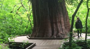 This Quaint Little Trail Is The Shortest And Sweetest Hike In Washington