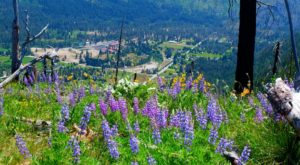 9 Easy And Beautiful Spring Hikes Everyone In Washington Will Love
