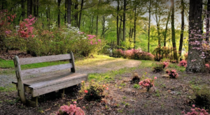 The Secret Garden Hike In Maryland Will Make You Feel Like You're In A Fairytale