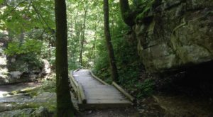 The Ancient Forest In Virginia That's Right Out Of A Storybook