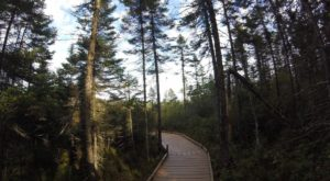 This Beautiful Boardwalk Trail In Maine Is The Most Unique Hike Around
