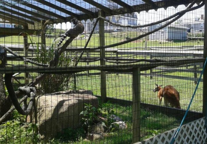 There Is An Exotic Animal Farm At The Rhode Island 1661 Inn