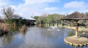 The Unusual Zoo In South Carolina That's Fun For The Whole Family