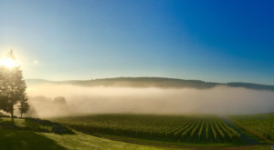 10 Small Town Wineries In New Jersey You'll Want To Explore