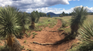 This Trail Is The Most Colorful Springtime Hike In New Mexico